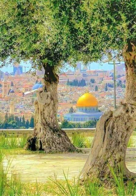 القدس والبعد الطبقي للسؤال المخادع: