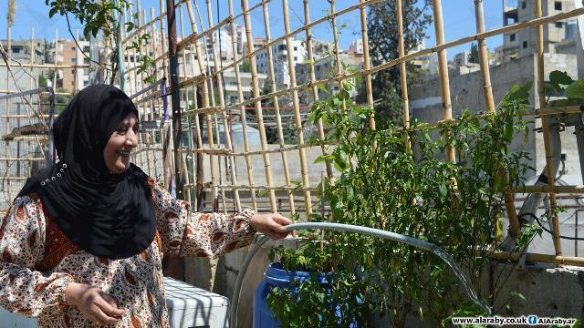 زراعة وتربية دواجن في مخيم عين الحلوة