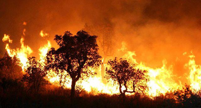 الجبهة الشعبية لتحرير فلسطين تقدم العزاء للرئيس الجزائري باستشهاد عدد من الجنود والمدنيين جراء اندلاع الحرائق