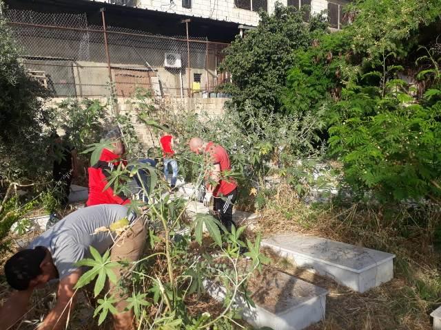 اللجان العمالية الشعبية الفلسطينية ومنظمة الشبيبة الفلسطينية في صيدا تنظفان مقبرة درب السيم